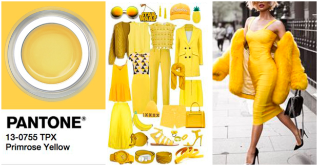 blog_primrose_yellow